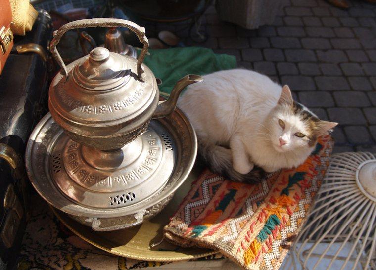 Giordania   Un gatto accanto a una teiera